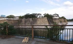 さんご大阪城2-min