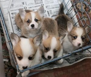 めあり子犬たち1-min