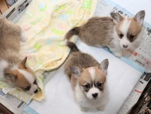 めあり子犬たち3-min