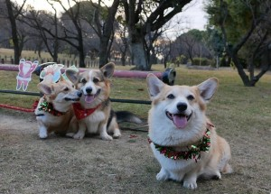 クリスマス3-min - コピー