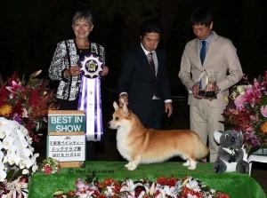 ミルトン千葉全犬種展ベストインショー2017年11月