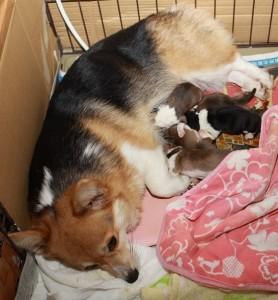 レナ出産2-min