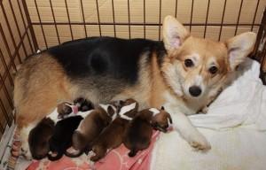 レナ出産3-min