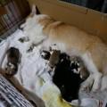 来夢出産2